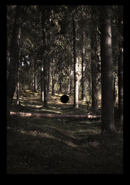 Maisemakuva kuusimetsästä. Keskellä on kaatunut puu. Sen yläpuolella on musta ympyrä.