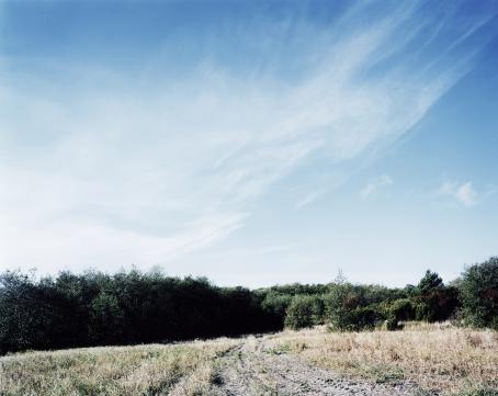 Maisema, jossa vihreää koivikkoa ja sininen taivas.