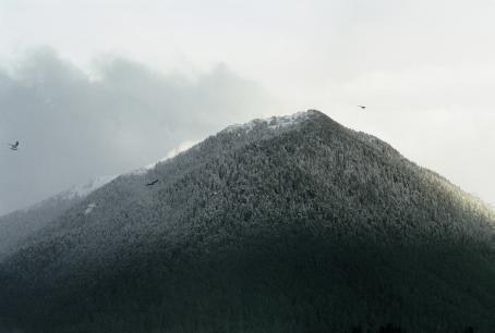 Maisema, jossa metsäinen vuori tai tunturi. Kolme lintua lentää sen ympärillä.