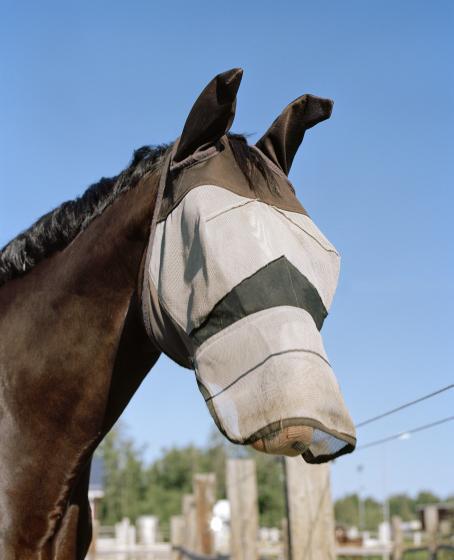 Hevosen pää kuvattuna hieman alhaalta päin sinistä taivasta vasten. Hevosen turpa ja silmät on peitetty harmaalla kankaalla.
