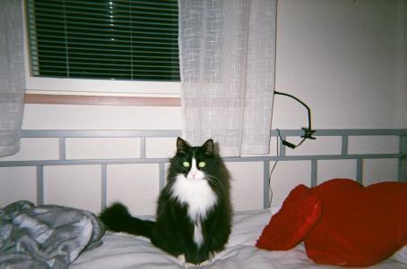 Sängyllä istuu mustavalkoinen kissa, jonka silmät kiiluvat vihreinä. Sängyllä on punainen sydämenmuotoinen tyyny. Takana on ikkuna, jossa on valkoiset verhot.