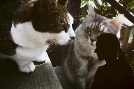 Kaksi kissaa istuu portailla. Kuvassa on myös alareunassa ihmisen musta siluetti.