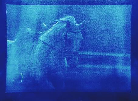 Sinisävyisessä, rakeisessa kuvassa valkoinen hevonen, jolla on satula selässä.