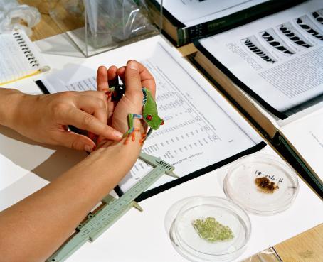 Sanna Kannisto: Frog studies 1, 2001.