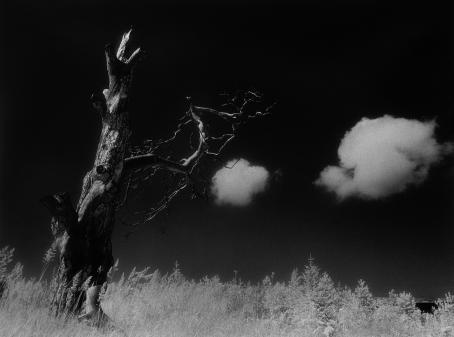Mustavalkoinen, tumma maisema, jossa on vanha lehdetön puu ja taivaalla kaksi valkoista pilveä.