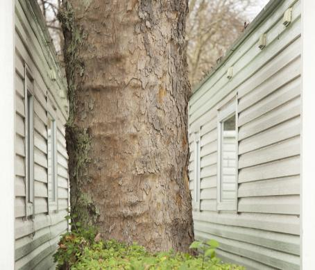 Osa puunrunkoa, jonka molemmilla puolilla näkyy talojen seinää.