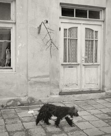 Mustavalkoisessa kuvassa koira kävelee kadulla. Takana rakennuksen ikkunassa kissa on noussut vasten ikkunaa.