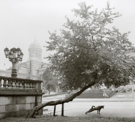Mustavalkoisessa kuvassa puu kasvaa viistosti ylöspäin ja sitä pitää ylhäällä kaksi tukikeppiä. Puun alla on takaruumistaan venyttelevä koira.