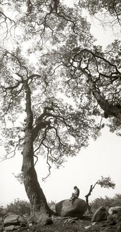 Mustavalkoisessa kuvassa on isoja käppyräisiä puita, joiden alla kivellä istuu apina.