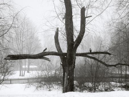 Mustavalkoisessa kuvassa on puu, jonka keskellä on iso oksa poikittain. Oksan päällä istuu kaksi lintua.