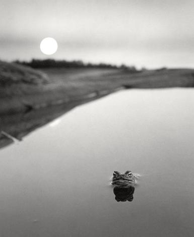 Mustavalkoisessa kuvassa on tyyni vedenpinta, josta pistää esiin sammakon pää.