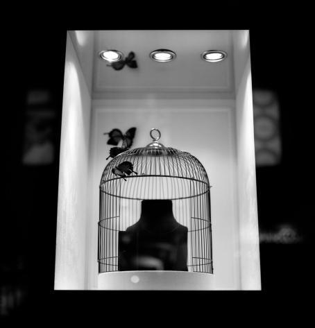 Mustavalkoisessa kuvassa valaistussa näyteikkunassa näkyy lintuhäkki sekä perhosia.