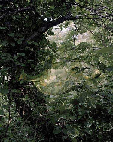 Puunoksia ja vihreitä lehtiä, joiden keskellä on läpinäkyvää vihreää kangasta.