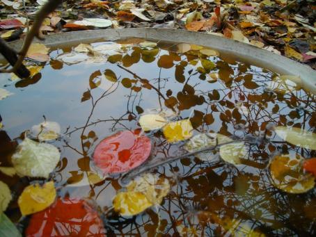Iso astia täynnä vettä. Veden pinnalla kelluu värikkäitä lehtiä, ja vedestä heijastuu puun oksia.