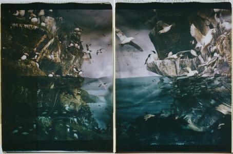 Kaksi kuvaa vierekkäin. Vasemmanpuoleisessa on veden yllä kalliota, missä on lintuja. Lintuja on myös veden alla. Oikeanpuoleisessa kuvassa on myös lintuja istumassa kallioilla, mutta veden alla on myös ihminen, josta erottuu lähinnä mustat hiukset ja käsi.