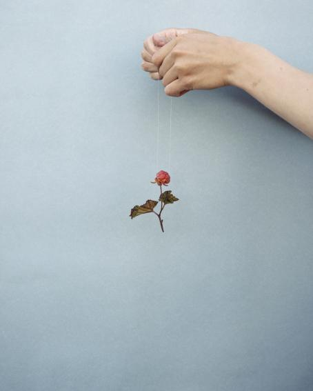 Oikeasta reunasta tulevat kädet, jotka roikottavat ohuen narun päässä mesimarjan varpua. Tausta on vaaleansininen.