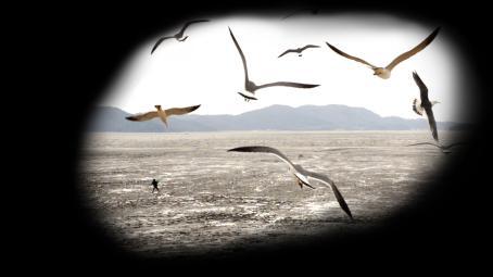 Mustan pinnan keskellä on pyöreähkö aukko, jossa näkyy tasankoa ja kaukana vuoria. Tasangolla juoksee ihminen, ja taivaalla lentää paljon lokkeja.
