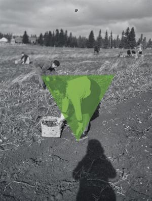 Mustavalkoisessa kuvassa nainen kumartuneena pellolla poimimassa perunoita. Hänen kohdalleen on tehty vihreä kolmio, jonka sisälle hän jää lähes kokonaan.