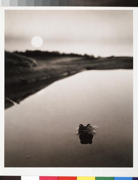 Mustavalkoisessa kuvassa tyyni vedenpinta, josta pistää esiin sammakon pää.
