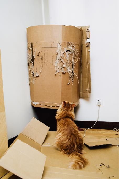 Oranssi kissa istuu pahvien päällä ja katsoo raavittua pahvilaatikkoa.