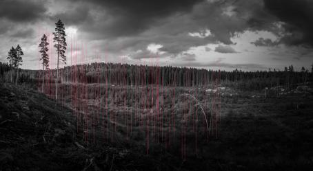 Mustavalkoinen laaja maisemakuva metsäaukiosta, jossa kasvaa lyhyitä puuntaimia. Kuvassa on ohuita punaisia viivoja jotka ovat suunnilleen puun korkuisia.