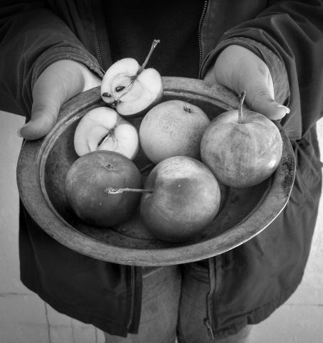 Mustavalkoisessa kuvassa henkilö pitää käsissään kulhoa, missä on omenoita, neljä kokonaista ja yksi kahtia halkaistu.
