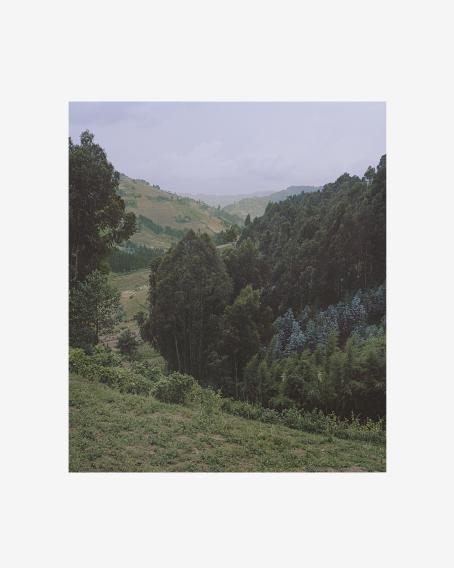 Vihreää, kumpuilevaa maisemaa, osittain metsää ja osittain niittyä.