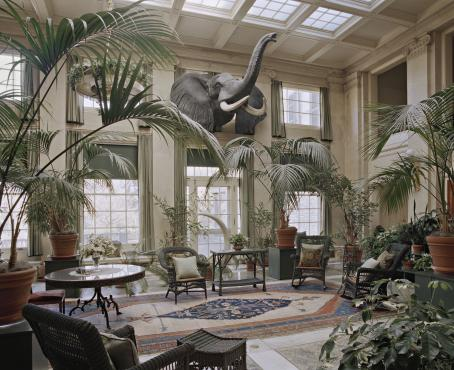 Huone, jossa on paljon huonekasveja. Yhdellä seinällä on monta ikkunaa vierekkäin, niiden yläpuolella on norsun pää. Lattialla on hieno matto, tuoleja ja pöytiä.