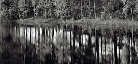 Mustavalkoisessa kuvassa metsän heijastus veteen. Rannan metsä on tarkka, mutta heijastus on hieman sumea.