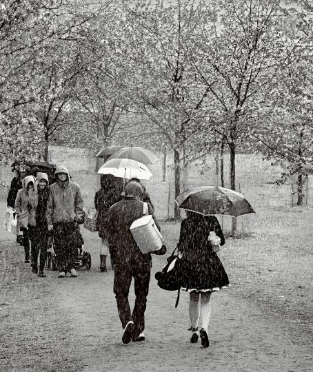 Mustavalkoisessa kuvassa kävelee ihmisiä vesisateessa kirsikkapuiden keskellä. Osalla on sateenvarjo.
