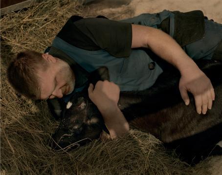 Mies makaa heinien päällä ja pitää sylissään mustaa vasikkaa. Miehellä on musta t-paita ja siniset työhaalarit.