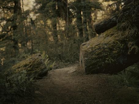 Metsässä kulkeva kapea polku, jonka yli on kaatunut puu mutta siihen on sahattu polun mentävä aukko.