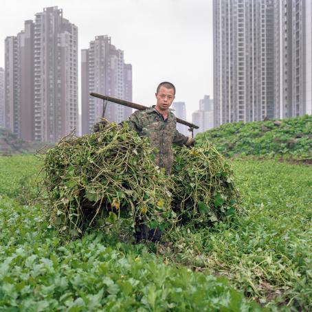 Vihreällä pellolla mies kantaa olallaan poikittain olevan kepin päissä vihreitä kasveja. Hänellä on lyhyt sänkitukka ja maastokuvioinen paita. Pellon takana näkyy korkeita kerrostaloja.