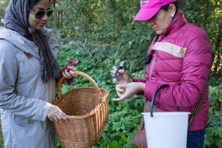 Kerätyt sienet kannattaa puhdistaa jo heti metsässä. Kuva: Virve Laustela, Suomen valokuvataiteen museo