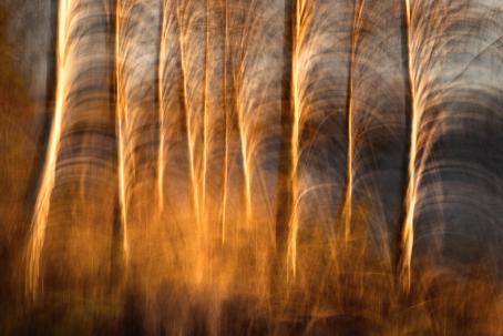 Insta_Suomi-tapaustutkimuksen aineistoa. Kuva: Ari-Matti Nikula (@arimattinikula_photography), 16.11.2018. Suomen valokuvataiteen museo, D2018:89/8/10.