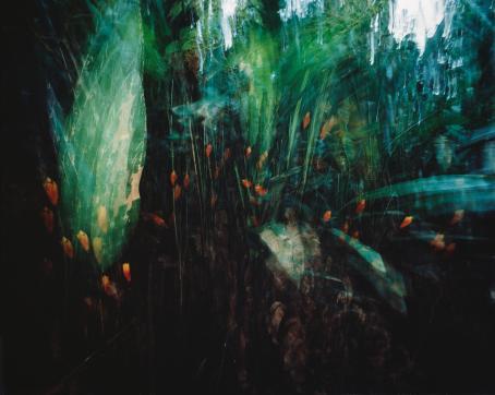 Sanna Kannisto: Heliconiat, 1998. Kromogeeninen värivedos. Suomen valokuvataiteen museo