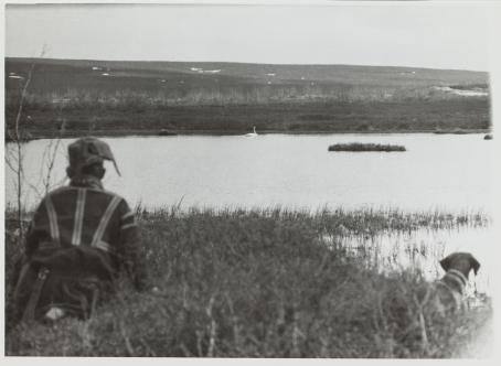 Yrjö Kokko: kirjasta Laulujoutsen, 1950. Mies ja ajokoira tarkkailevat joutsenta. Hopeagelatiinivedos. Suomen valokuvataiteen museo