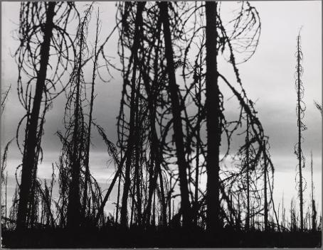 Ismo Hölttö: Pohjois-Karjala, 1967, kirjasta Suomea tämäkin. Hopeagelatiinivedos. Suomen valokuvataiteen museo