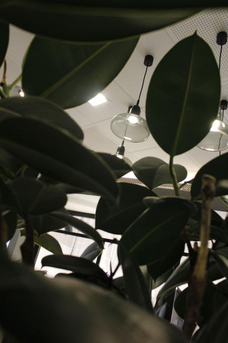 Etualalla muovisilta näyttäviä vihreitä kasvin lehtiä. Niiden takana katosta roikkuvia lamppuja.