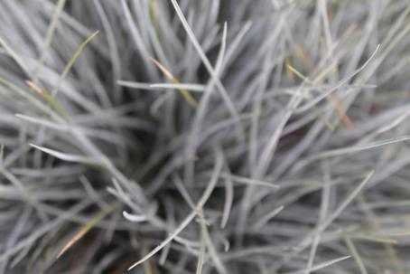 Ylhäältäpäin otetussa kuvassa ruohonkorsia, joista suurin osa on harmaita, osa vihreitä.