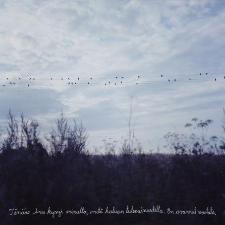 """Kuvan yläreunassa kulkee vaakatasossa pilvistä taivasta vasten kolme sähkölinjaa, joilla istuu paljon lintuja. Kuvan alareunassa etualalla on epäterävää pusikkoa. Alareunaan on kirjoitettu käsin """"Tänään Anu kysyi minulta, mitä haluan tulevaisuudelta. En osannut vastata."""""""