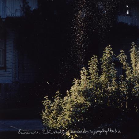 """Kuvan etualalla on auringon valaisemia vihreitä kasveja. Niiden yläpuolella leijuu valaistuna runsaasti pieniä hyönteisiä tai jotain hiukkasia. Tausta jää tummaan varjoon. Kuvan alareunaan on käsin kirjoitettu: """"Seurasaari. Tulituskohtaus Koreoiden rajavyöhykkeellä."""""""