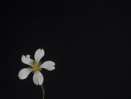 Kaisaniemen kasvitieteellisessä puutarhassa kuvattu lähikuva kukasta.