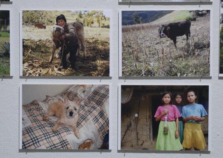 Valokuvia esillä näyttelyssä. Kuvissa näkyy lapsia ja eläimiä.