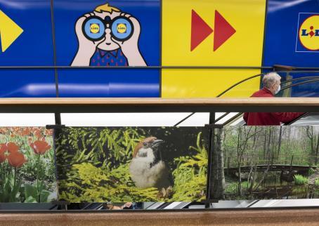 Kauppakeskuksen liukuportaiden vieressä olevassa lasisessa aidassa on kiinni isoja valokuvia. Keskellä on kuva linnusta kuusen oksalla, oikealla puolella kuva sillasta metsässä ja vasemmalla puolella punaisia kukkia.