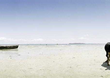 Maisemakuva hiekkarannalta. Rannassa on vene ja koira.
