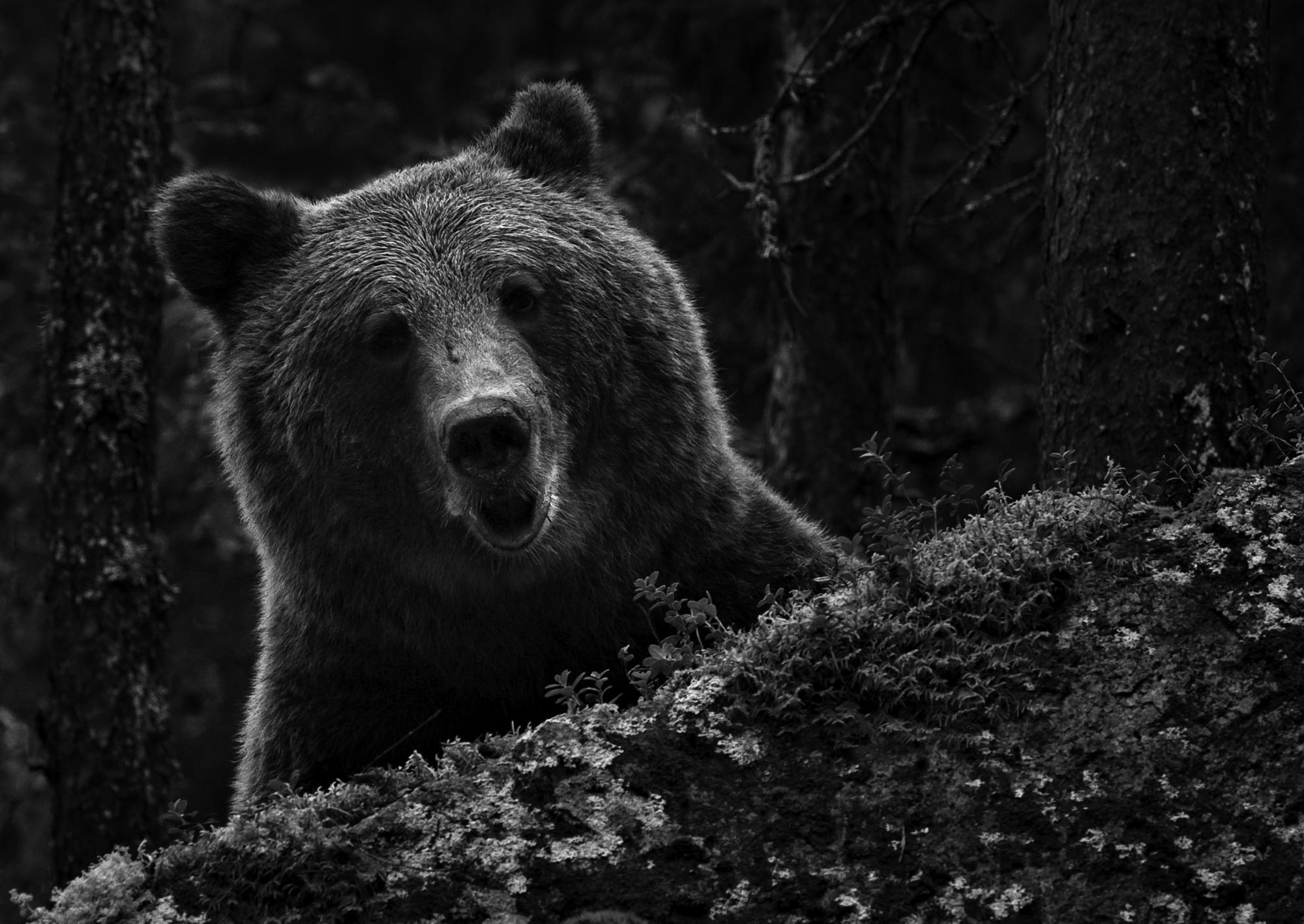 """""""Yritän katsoa maailmaa, josta kaikki alkoi, löytää ihmisen ja eläimen kohtaamisen ytimeen. Katson ikivanhoja kuvia, pohdin omia kuviani ja kysyn: miksi eläinkuvan tekeminen on niin tärkeää?"""" —Heikki Willamo"""